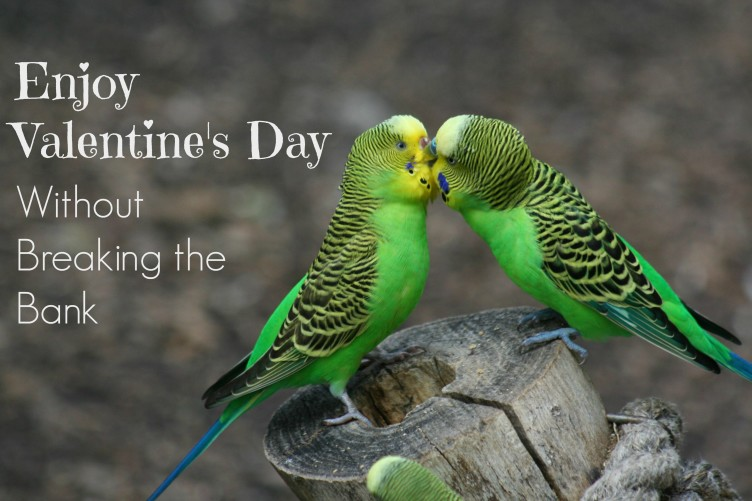 Valentine's Day Parakeets Kissing_Morguefile